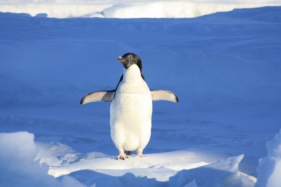 penguin funny blue