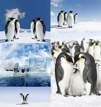 penguins of the antarctic glacier definition picture 5p