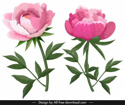 peony icons pink green classical handdrawn sketch