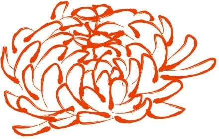 peony drawing colored handdrawn sketch