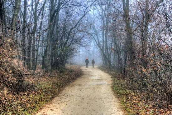 people walking into misty forest in madison wisconsin