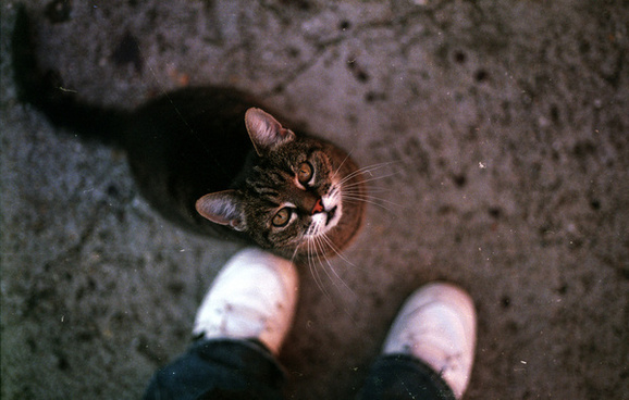 pet me now
