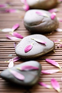 petals and stones stock photo