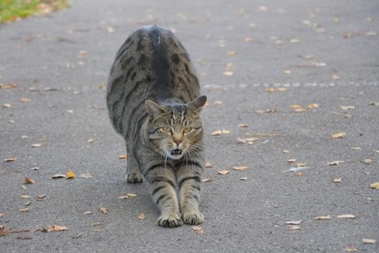 pets cat mackerel