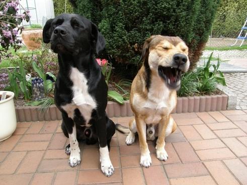 pets dogs animal