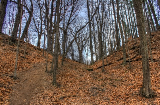 photo of the hill at pewits nest natural area wisconsin