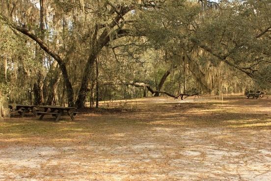 picnic area at big shaols state park florida