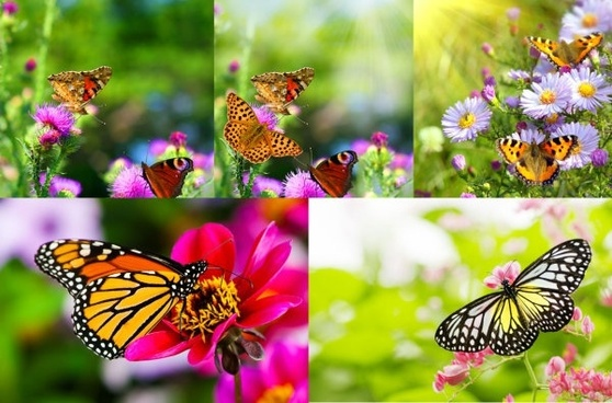 picture of flowers and butterflies hd