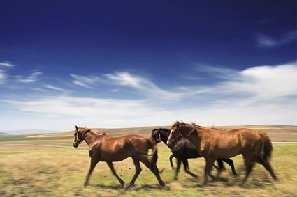picture of the horses on the prairie