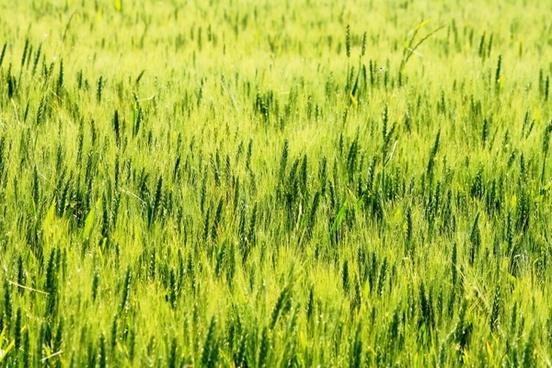 pin field green nature