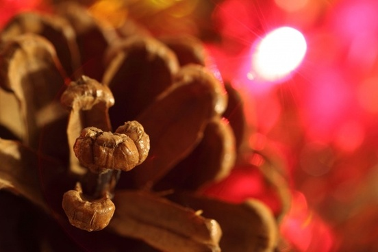 pine cone and red light