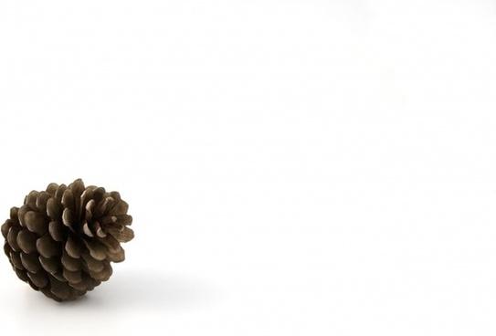 pine cone autumn