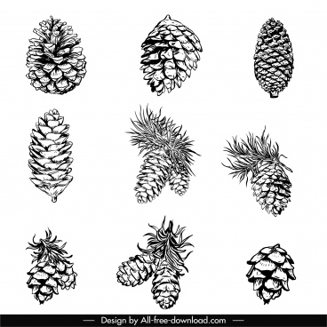 pine cone icons black white classic handdrawn sketch