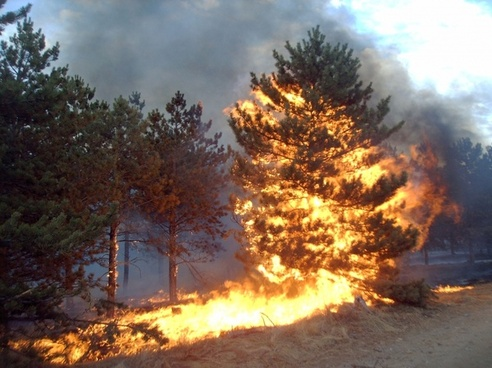 pine fire flare