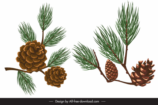 pine seeds icons colored classic design