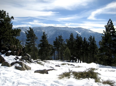 pine trees on snow covered mountain top