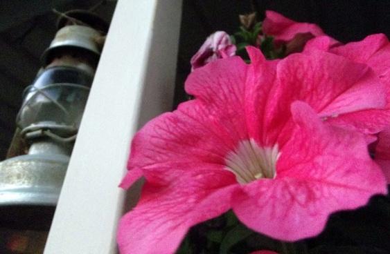 pink flower lantern 2