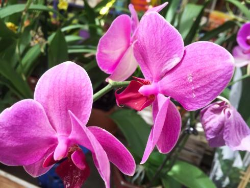 pink flower macro 2