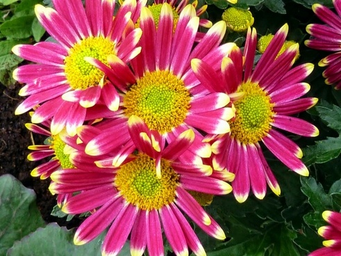pink flowers bunch