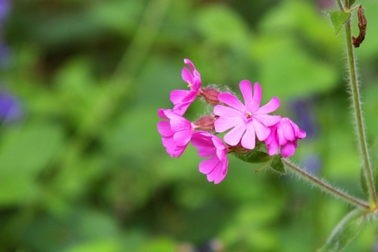 pink forest flower