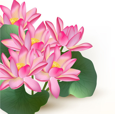 Pink Lotus Flower Free Vector Download 12437 Free Vector For