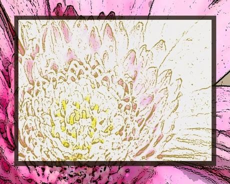pink lotus invitation