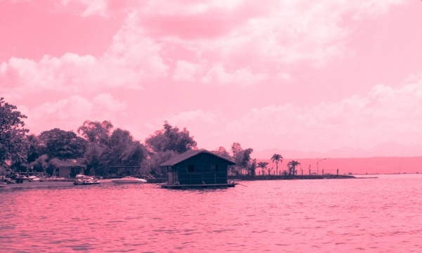 Pink nature background free stock photos download (27,100