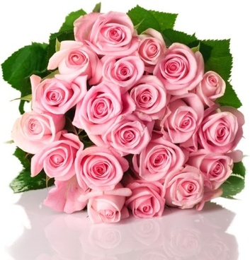 Rose flowers free stock photos download 11612 free stock photos pink rose 03 hd pictures mightylinksfo