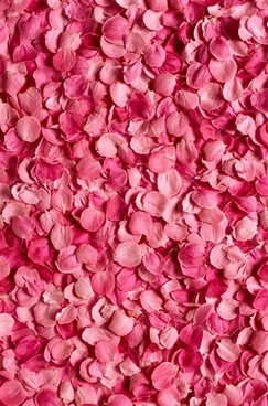 pink rose petals background picture