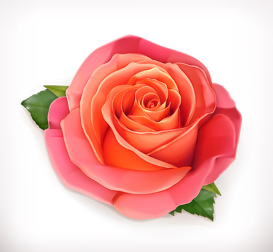 pink rose with green leaves vector
