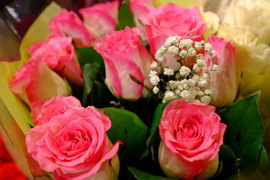 pink roses and statice
