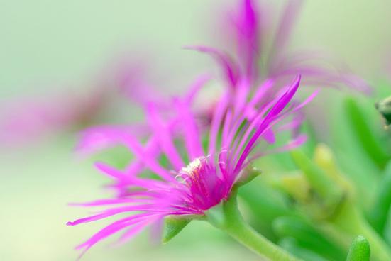 pink vasion