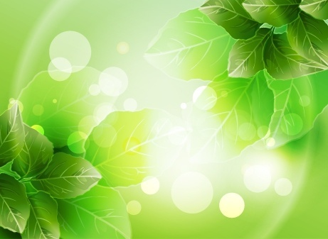 nature background green leaves decor vivid bokeh design
