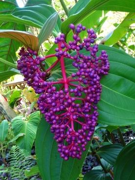 plant botanical garden
