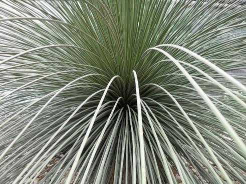 plant cactus long