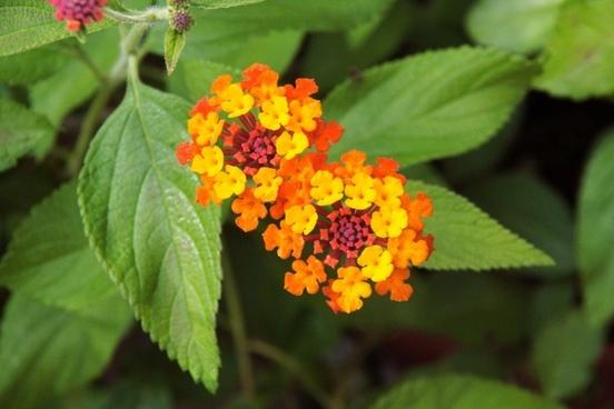 plant flower green
