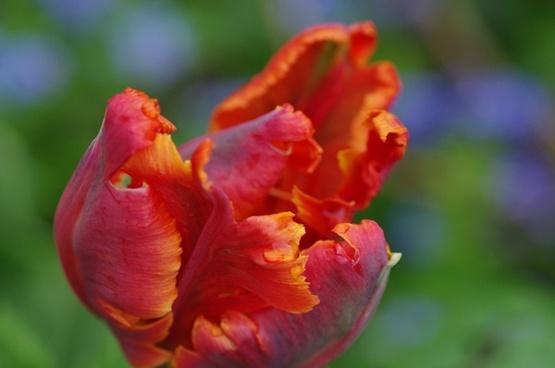 plant flower macro