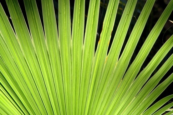plant green palm