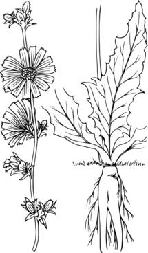 Plant Outline clip art