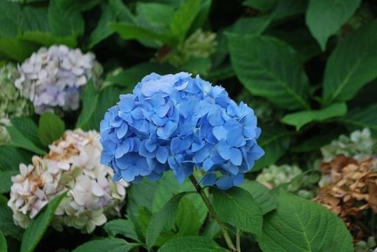 plant plants flower