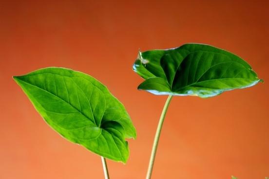 plant sheet green