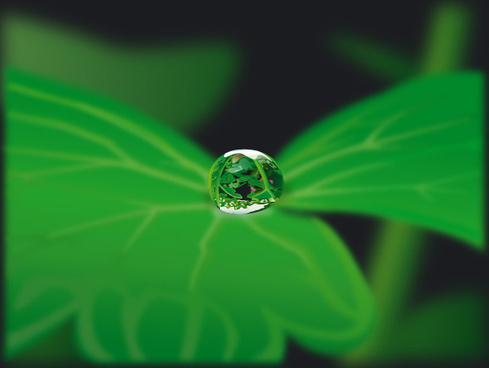 plant with water drops design vector