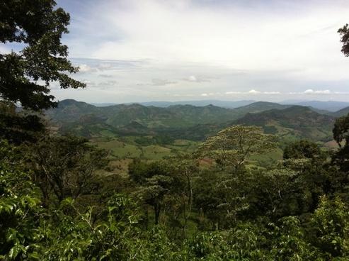 plantation coffee nicaragua