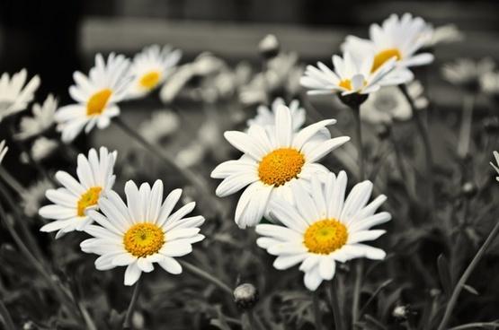 plants flower love
