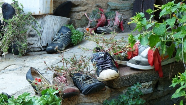 plants shoes old
