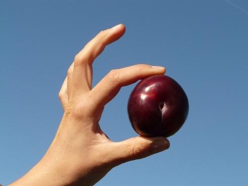 plum fruit food