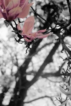plum on grey