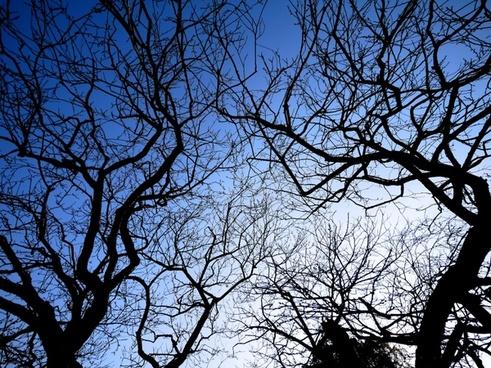 plum sky wood
