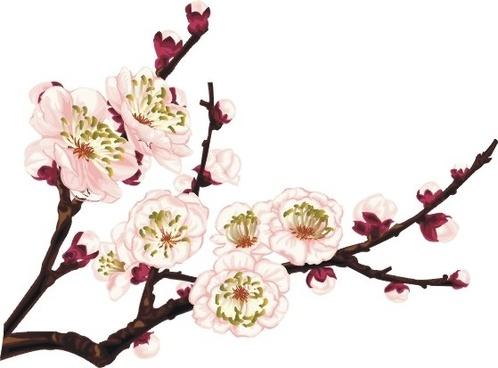 cherry blossom icon design closeup classical style