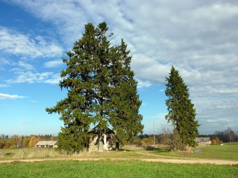 poland trees landscape